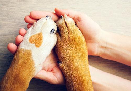 mejor guarderia de mascotas